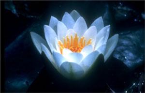flower-light