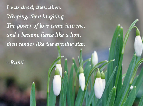 urdu rumi in quotes sufi tarslation quotesgram