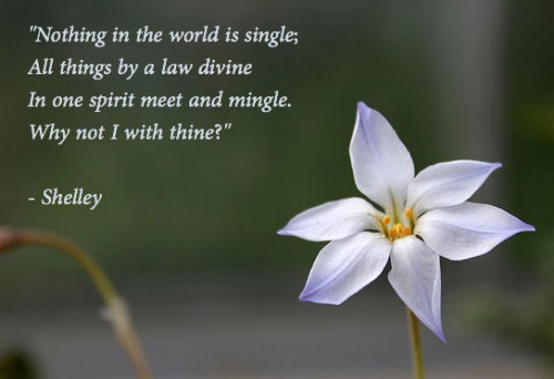 shelley-poem