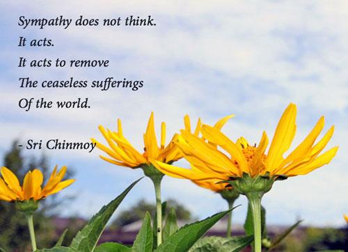 sympathy-does-not-thinkflower-blue-sky-slider-500-350