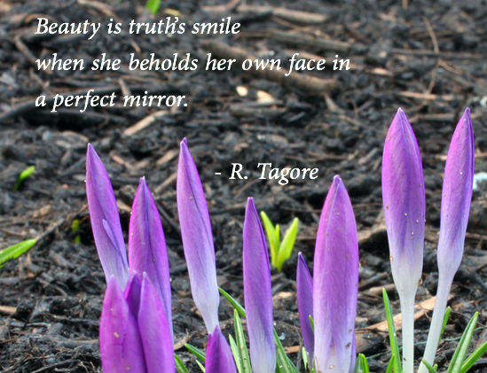 tagore-beauty
